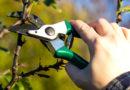 Весеннее обрезание садовых деревьев