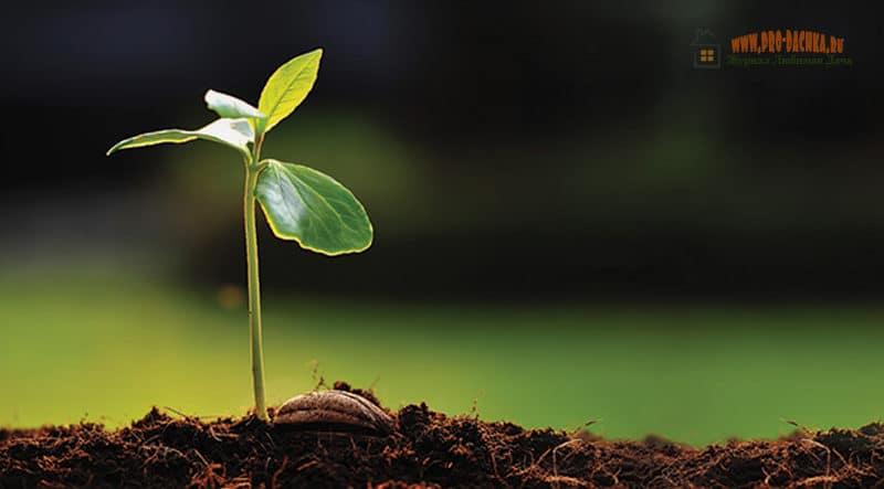 Советы садоводам: саженцы плодовых культур