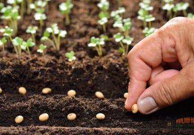 Как эффективно вырастить рассаду из семян с большим периодом прорастания